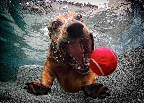 Underwater Dogs Seth Casteel (4)