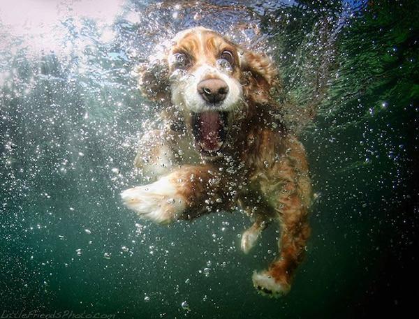 Underwater Dogs Seth Casteel (5)