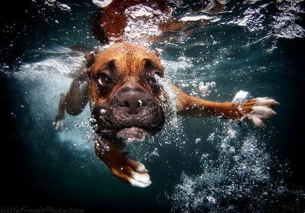 Underwater Dogs Seth Casteel (6)