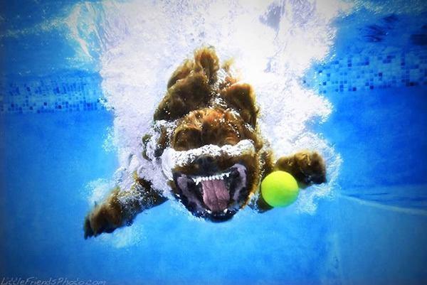 Underwater Dogs Seth Casteel (7)