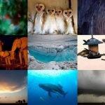 Las fotos más bellas de la Naturaleza 2012