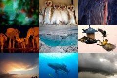 fotos más bellas Naturaleza 2012 (4)