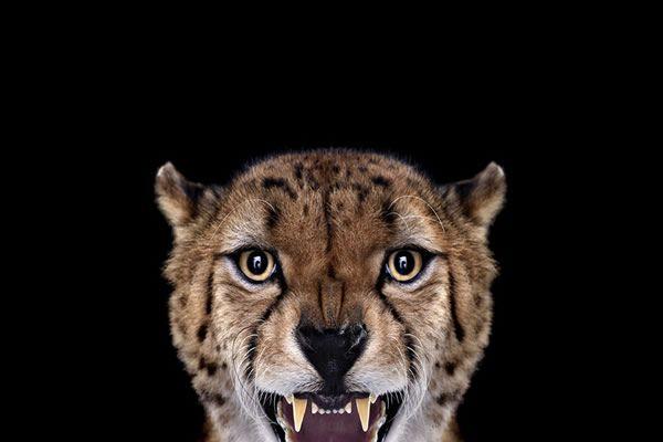 Brad Wilson animales fotografia (23)