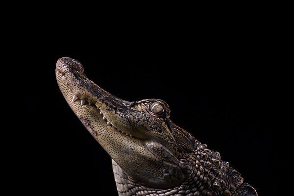 Brad Wilson animales fotografia (22)