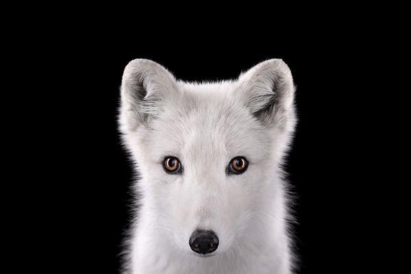 Brad Wilson animales fotografia (21)