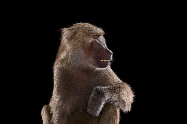 Brad Wilson animales fotografia (20)