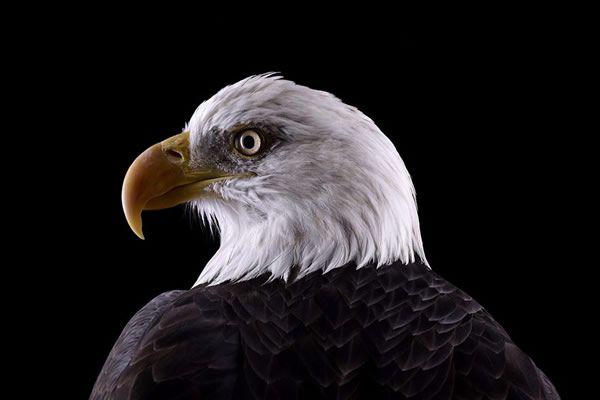 Brad Wilson animales fotografia (19)