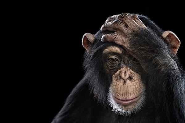 Brad Wilson animales fotografia (18)