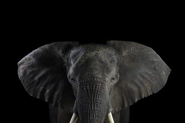 Brad Wilson animales fotografia (17)