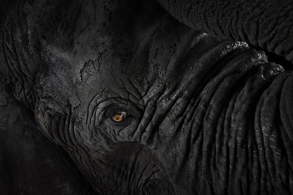 Brad Wilson animales fotografia (2)