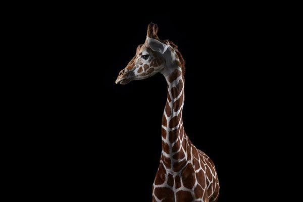 Brad Wilson animales fotografia (16)