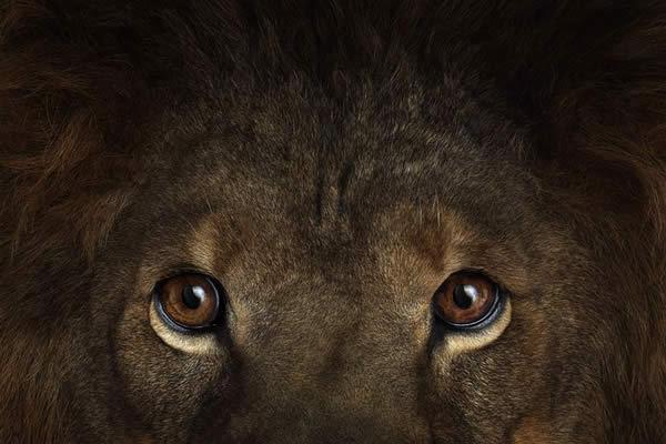 Brad Wilson animales fotografia (1)