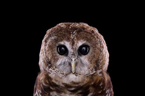 Brad Wilson animales fotografia (14)