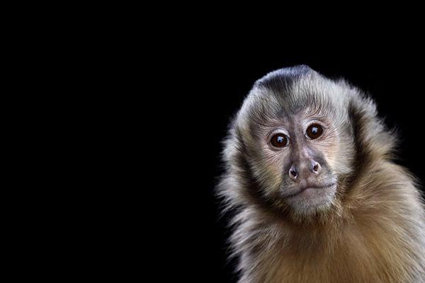 Brad Wilson animales fotografia (13)