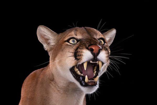 Brad Wilson animales fotografia (12)