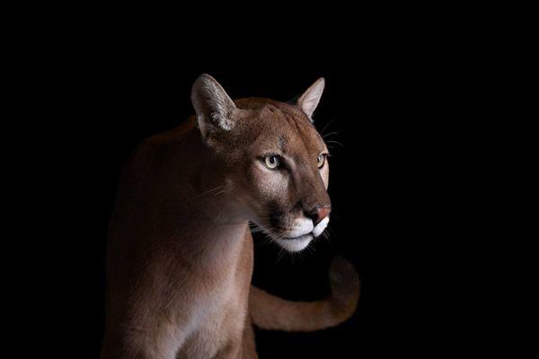 Brad Wilson animales fotografia (11)