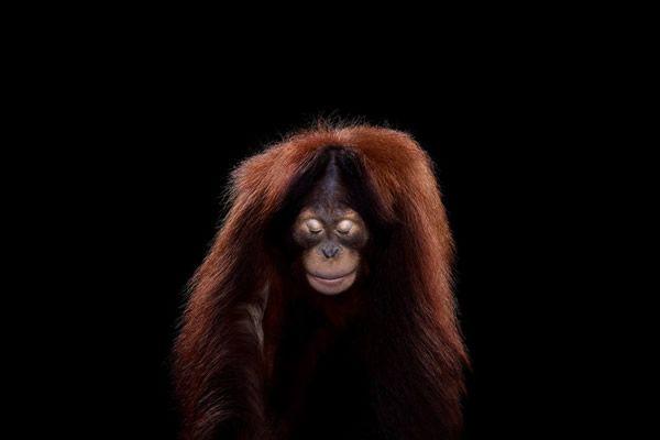 Brad Wilson animales fotografia (10)