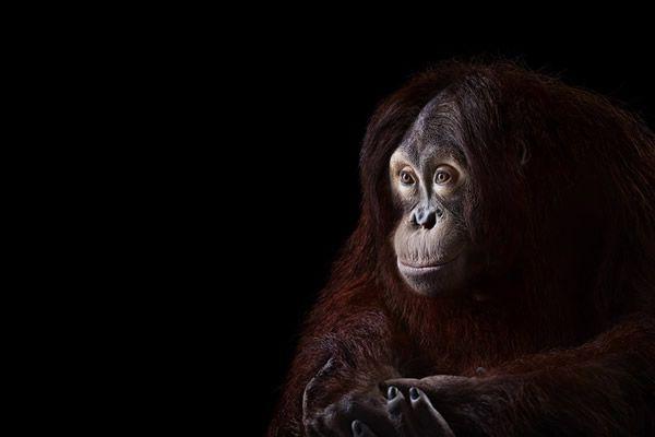 Brad Wilson animales fotografia (9)
