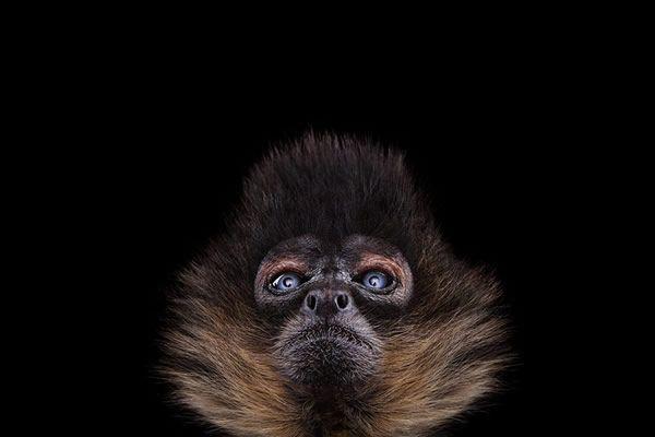 Brad Wilson animales fotografia (8)