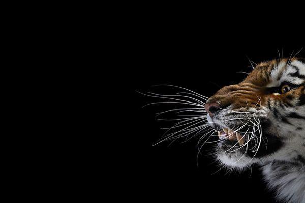 Brad Wilson animales fotografia (7)