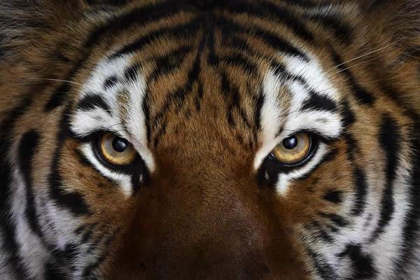 Brad Wilson animales fotografia (4)