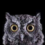 Fotografías salvajes de Brad Wilson