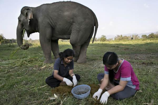 Black Ivory café elefantes (1)