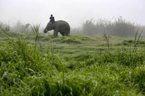 Black Ivory café elefantes (22)