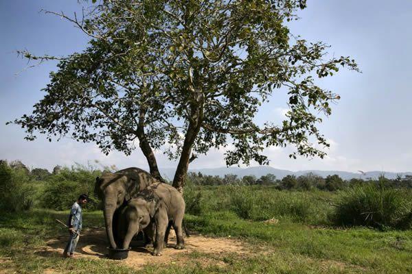 Black Ivory café elefantes (20)