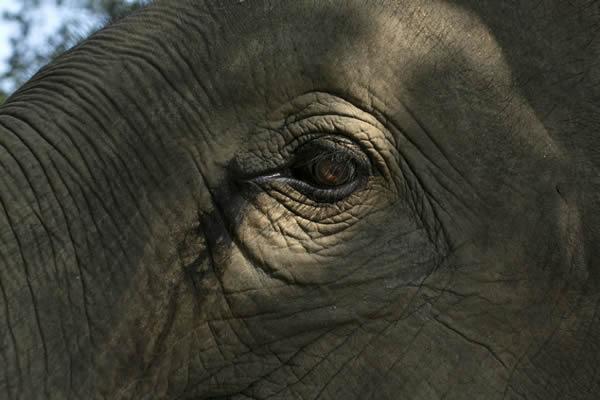 Black Ivory café elefantes (8)