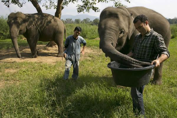 Black Ivory café elefantes (6)