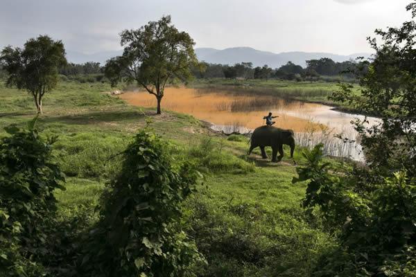Black Ivory café elefantes (5)
