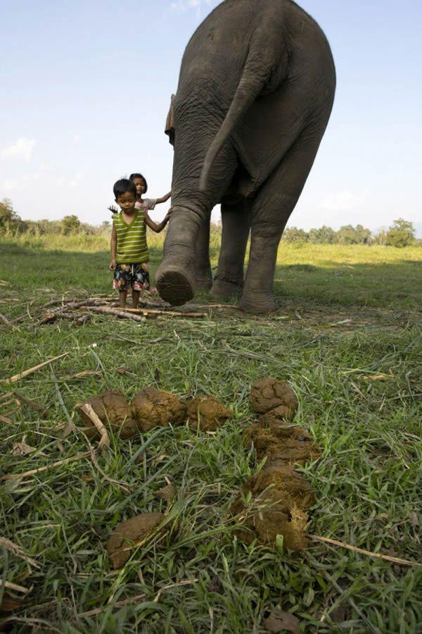 Black Ivory café elefantes (18)