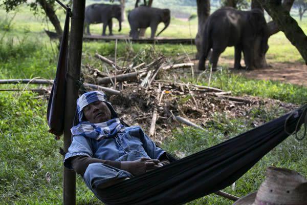 Black Ivory café elefantes (17)