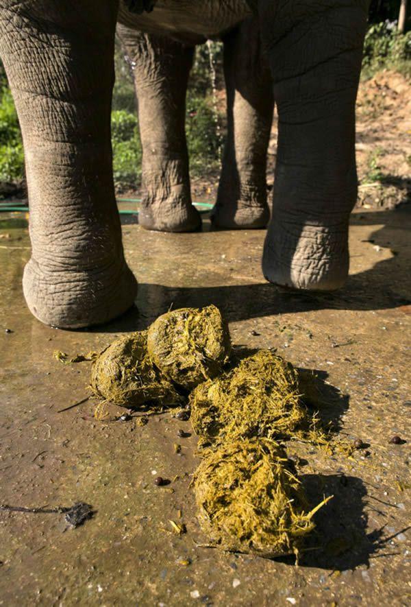 Black Ivory café elefantes (15)