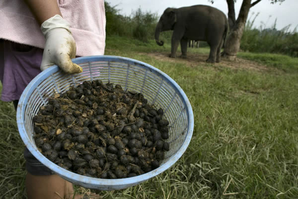 Black Ivory café elefantes (9)