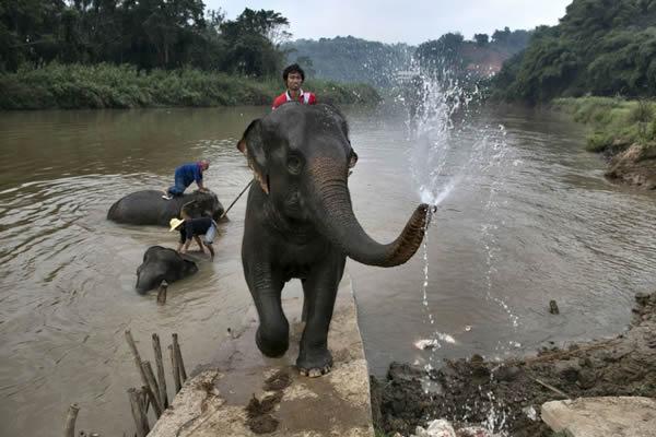 Black Ivory café elefantes (11)
