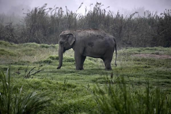 Black Ivory café elefantes (10)