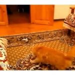 gato miedoso