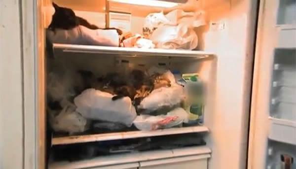 gatos congelados