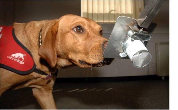 10 Cosas qué los perros pueden detectar