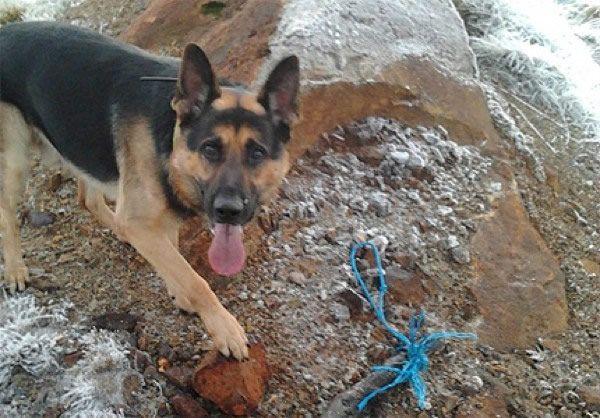 perro entrenado para older detectar (8)