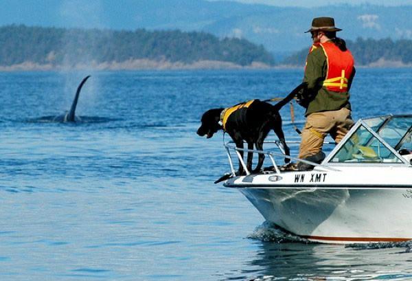 perro entrenado para older detectar (6)