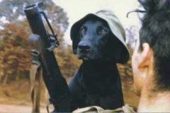 perro entrenado para older detectar (5)