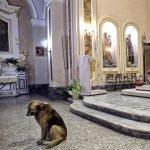 Perro va a misa todos los días en busca de su dueña muerta