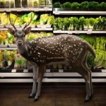 Animales en el supermercado