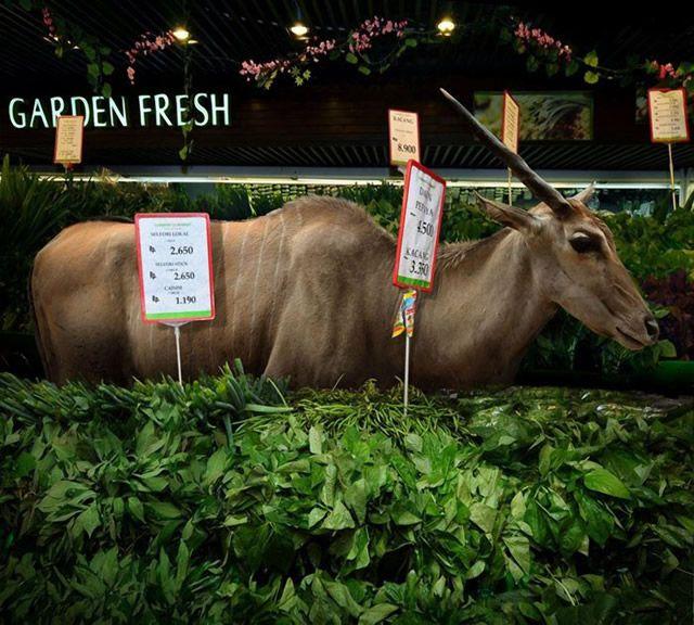 Agan Harahap Fresh Garden (5)