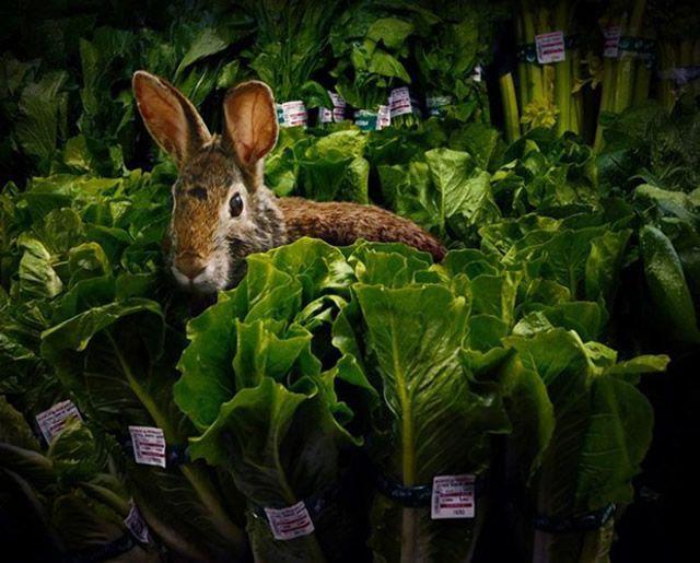 Agan Harahap Fresh Garden (1)