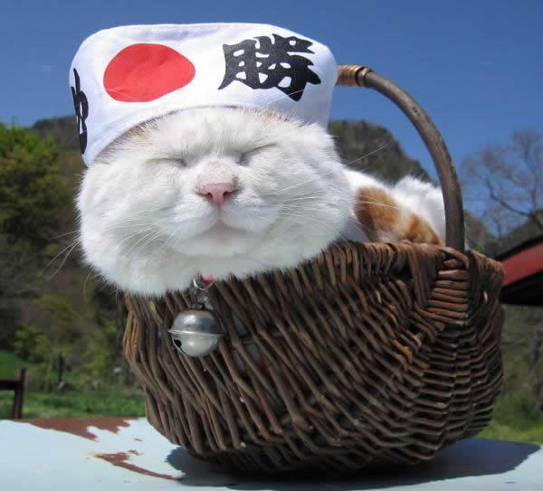 gato Shironeko (2)