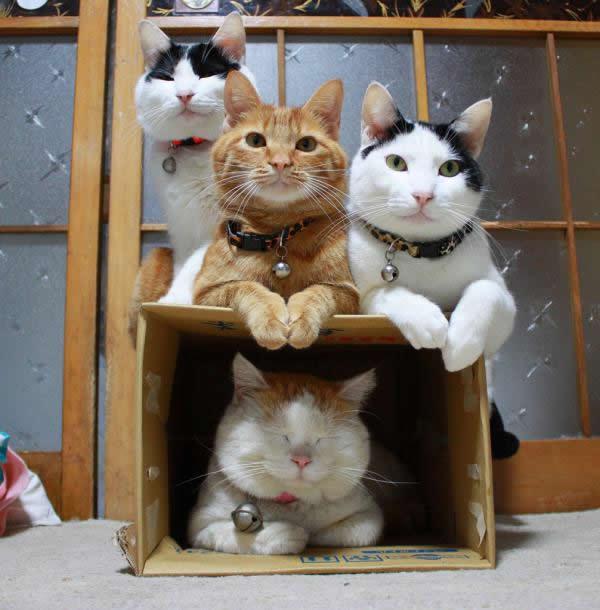 gato Shironeko (1)